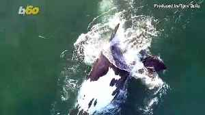 Boat Captain Catches Rare Video of Two Sperm Whales Near California's Coast [Video]