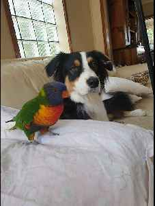 Parrot & doggy take turns playing fetch with their owner [Video]