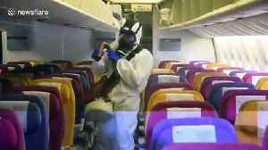 News video: Thai airline staff disinfect plane to stop the spread of coronavirus
