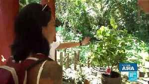 Endangered wildlife: Saving the Tarsier, Philippines' tiny primate [Video]
