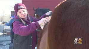 New Jersey Nonprofit Provides Sanctuary For Forgotten Horses [Video]
