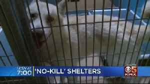 California Closer To Becoming A 'No Kill' State [Video]