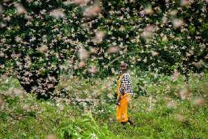 Millions of locusts are swarming all over East Africa [Video]
