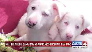 Oklahoma Rescue Group Warns of the Dangers of Breeding Dogs With the Merle Gene [Video]