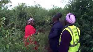 Villagers in Kenya attempt to smoke out swarms of locusts devouring their crops [Video]