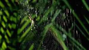 Monster Bug Wars: Banana Spider And Assasin Bug [Video]