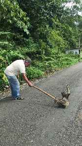 Man Helps Sloth Cross Road Using a Tree Branch [Video]