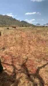 Herd of African Elephants Love Feeding Time [Video]
