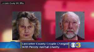 Lancaster County Couple Charged With Felony Animal Cruelty Over Horse's Death [Video]