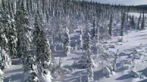 Frozen Planet: Wolves of Winter [Video]