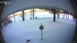 Fun-loving otter slides through backyard snow on security camera [Video]