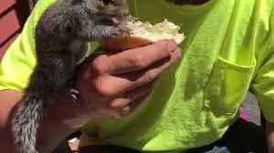 Squirrel Shares a Sandwich [Video]