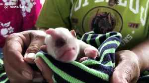 This Thai puppy born with one eye is described as a 'real-life cyclops' [Video]