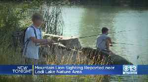 Mountain Lion Sighting Reported Near Lodi Lake Nature Area [Video]