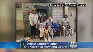 Bill Allows Support Dogs For Children In Md. Courts [Video]