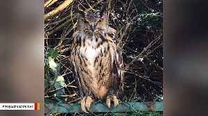 School Looking For Owner After 2-Foot-Tall Owl Ends Up In Playground [Video]