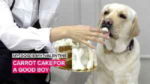 My Dog is My Valentine: Make your pup a carrot cake [Video]