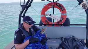 Crikey! Australian Police Save This Little Wallaby from Drowning [Video]