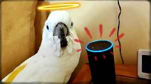 Cockatoo ends up ordering hilarious items through Alexa [Video]