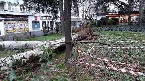 Paris streets littered with fallen trees and debris as Storm Ciara batters northern Europe [Video]