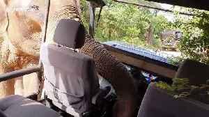 Wild bull elephant reaches into safari truck to rummage for food in hair-raising encounter [Video]