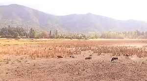 Chile's epic dry spell enters a critical phase [Video]