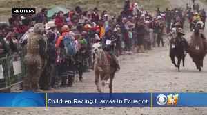 Video: Children Racing Llamas [Video]