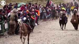 WEB EXTRA: Kids Racing Llamas in Ecuador [Video]