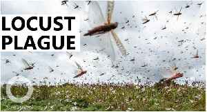 Locust plague threatens Somalia and eastern Africa [Video]