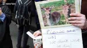 Protesters gather outside theatre show of vegan journalist who shot and ate deer [Video]