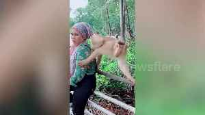 Monkey kicks away woman trying to pose for picture in Malaysia [Video]