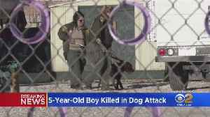 Small Child Killed After Family Dog Attacks Near Victorville [Video]