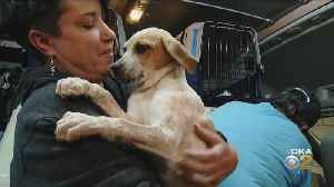 Rescue Dogs Arrive In Pittsburgh [Video]