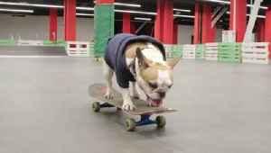 Skateboarding Dog is a Natural at the Skatepark [Video]