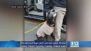 Emotional Support Labradoodle Stolen From Placer County Family Found Safe [Video]