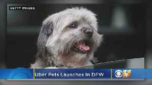Uber Testing Feature In Dallas That Lets Riders Tell Drivers About Accompanying Pets [Video]