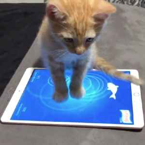 Cat plays fish game on an iPad [Video]
