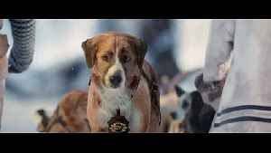 The Call of the Wild Movie Clip - New Lead Dog [Video]