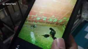 News video: Thai emergency team drill through house wall to rescue five orphaned kittens