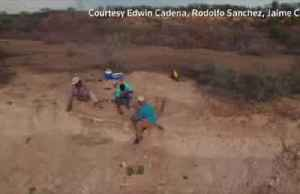 """""""Stupendous turtle"""" fossil discovered in Colombia [Video]"""