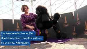 WEB EXTRA: Westminster Dog Show Winner On Victory Tour [Video]