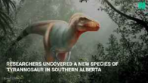 New Dinosaur Species Uncovered In Canada [Video]