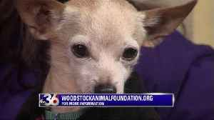 Pets Need Pals - Paul & Jones - Woodstock Animal Foundation [Video]