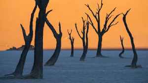 Not a Painting: Skeleton Trees in Middle of the Desert Create a Surreal Scene [Video]