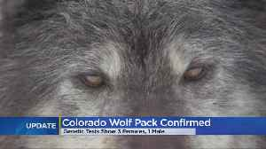 Biologists Collect Samples That Prove Wolves Are In Colorado [Video]