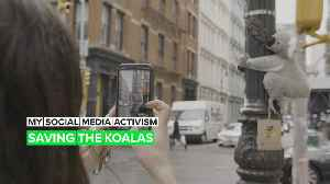 The story behind the 'wild' toy koalas taking over New York City [Video]