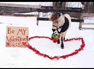 Mini Horse Dressed in Tuxedo Carries Bunch of Roses in Mouth for Valentine's Day [Video]