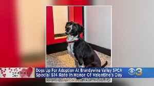 Brandywine Valley SPCA Offering Valentine's Day Special On Adoptions [Video]