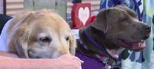 Local animal rescue celebrates 'doggy' Valentine's Day wedding [Video]