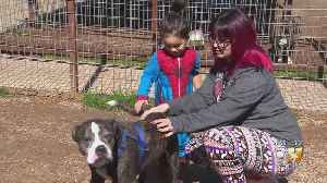Fort Worth Animal Shelter Hopes To Find Dogs Forever Homes Through Slumber Parties [Video]